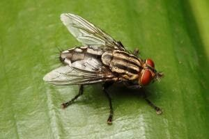 Fly Control. Get the Best Pest Control Services in Kolkata on Fly Control. Golden Pest Solutions also offer Termite Control, Cockroach Control, Bedbugs Control Mosquito Control Service etc.