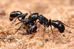 Ant Control in Kolkata. Get the best Ant Control service to exterminate ants from your premises.